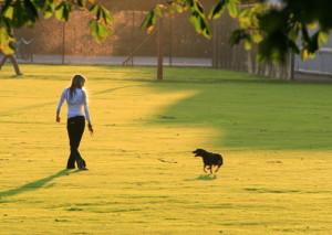 post_dogwalking2[1]